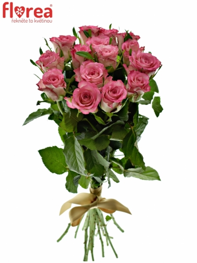 Kytice 15 růžových růží ENSEMBLE 40cm