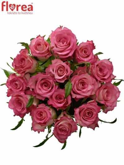 Kytice 15 růžových růží ENSEMBLE 50cm