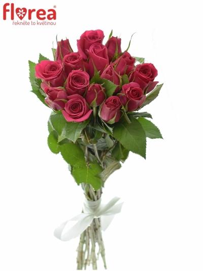 Kytice 15 růžových růží FUCHSIANA 60cm