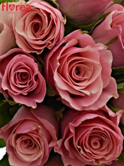 Kytice 15 růžových růží LIGHT PINK TACAZZI+ 40cm