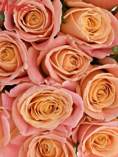 Kytice 15 růžových růží MISS PIGGY