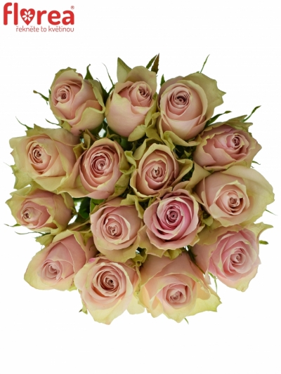 Kytice 15 růžových růží PINK ATHENA 50cm
