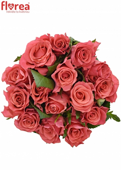 Kytice 15 růžových růží PINK TACAZZI