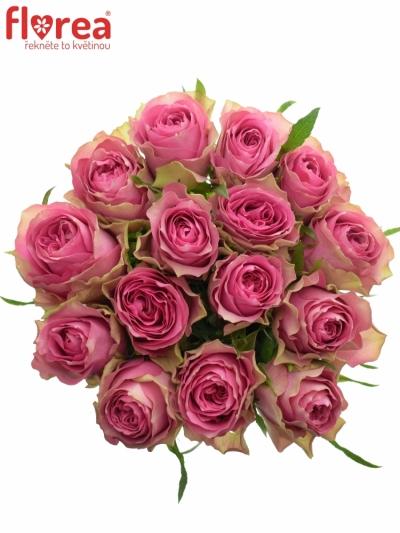 Kytice 15 růžových růží SHIARY 50cm