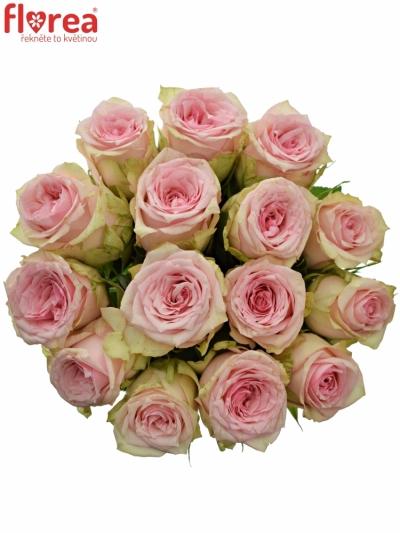 Kytice 15 růžových růží SUDOKU 50 cm
