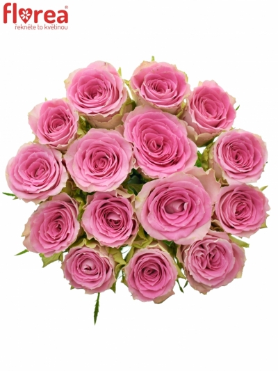 Kytice 15 růžových růží TIMES SQUARE