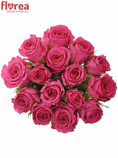 Kytice 15 růžových růží WINK 60 cm