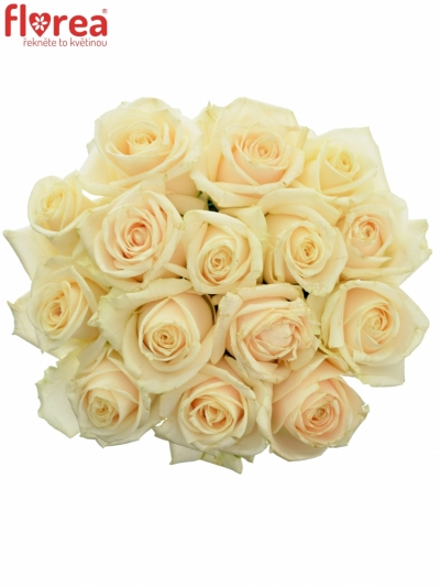 Kytice 15 smetanových růží VENDELA
