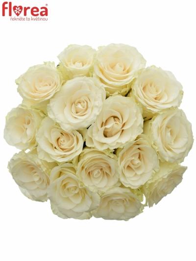 Kytice 15 světlekrémových růží SOLSY