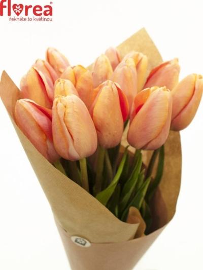 Kytice 15 tulipánů MENTON 50cm- papír