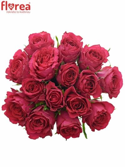 Kytice 15 vínových růží MADAM CERICE 40cm