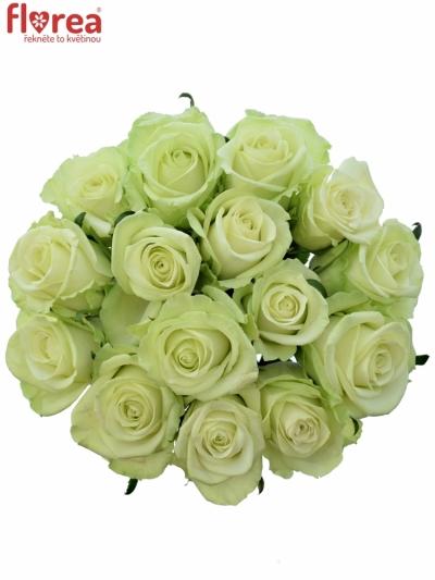 Kytice 15 zelených růží NOELLE!