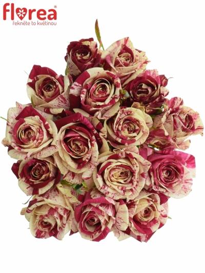 Kytice 15 žíhaných růží HARLEQUIN 50cm