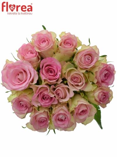 Kytice 15 žíhaných růží LOVELY JEWEL 50cm