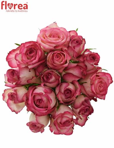 Kytice 15 žíhaných růží MYSTELLE 50cm