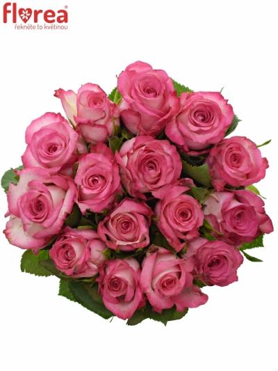 Kytice 15 žíhaných růží N-JOY 40cm