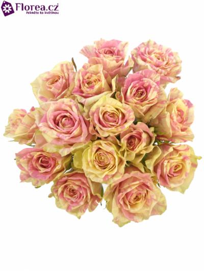 Kytice 15 žíhaných růží SWEET HARLEQUIN 50cm