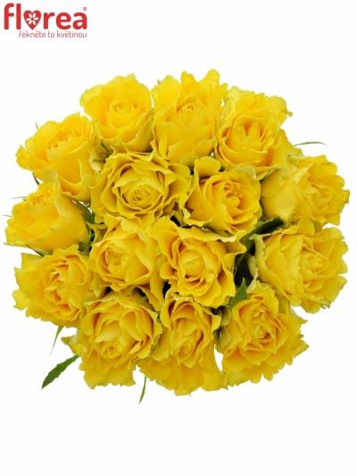 Kytice 15 žlutých růží VIVA