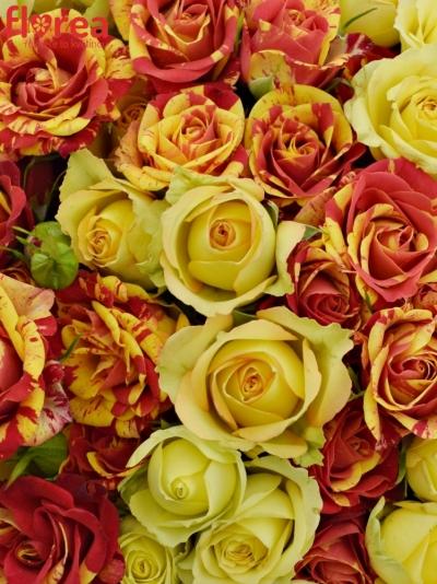 Kytice 20 míchaných růží ESTEFLASH 40cm