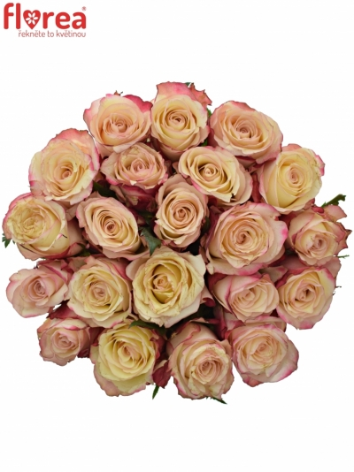 Kytice 21 bílorůžových růží ADVANCE SWEETNESS 40cm