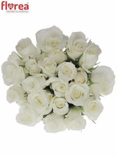 Kytice 21 bílých růží AKITO