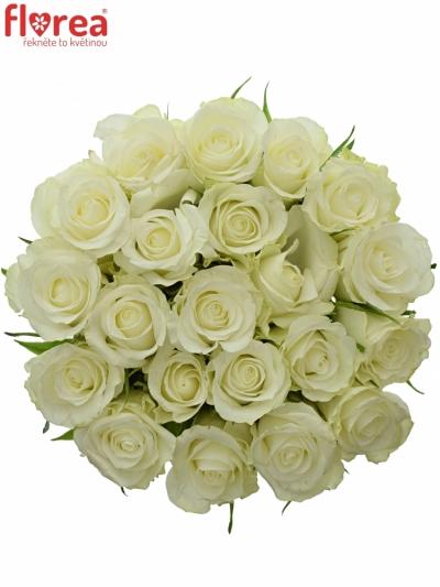 Kytice 21 bílých růží ASPEN 40cm