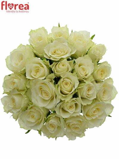 Kytice 21 bílých růží ATHENA 40cm