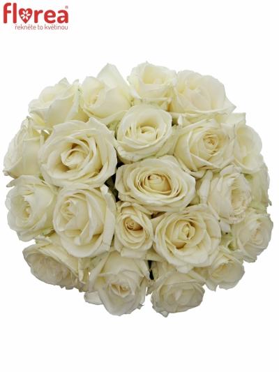 Kytice 21 bílých růží AVALANCHE  40cm
