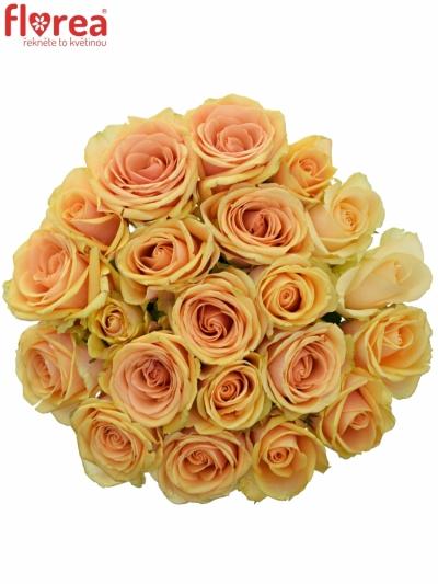 Kytice 21 čajových růží ALCHEMY
