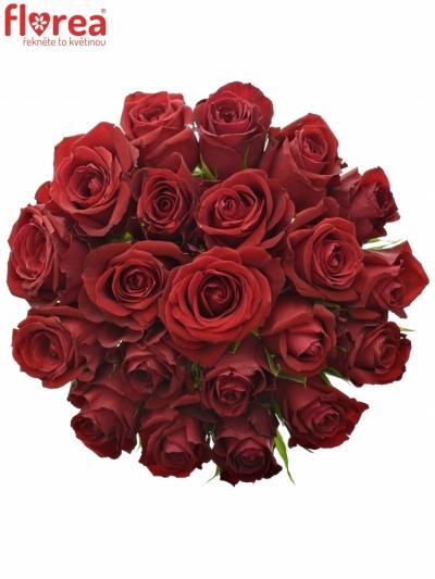 Kytice 21 červených růží FURIOSA 50cm