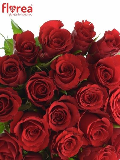 Kytice 21 červených růží RED CALYPSO 35cm