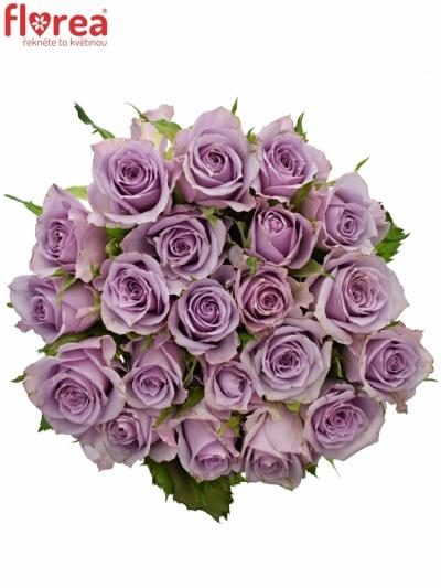 Kytice 21 fialových růží JAZZ 40cm