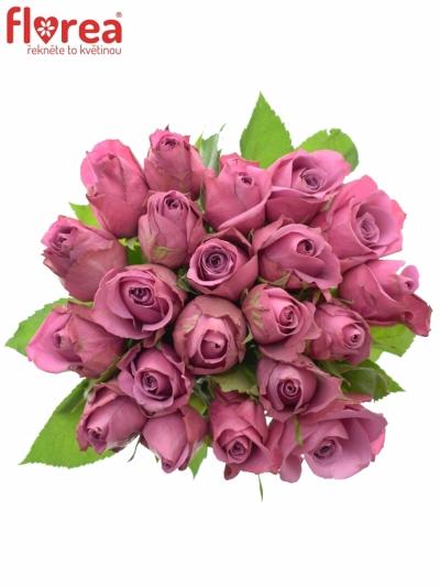 Kytice 21 fialových růží NEW ORLEANS 50cm