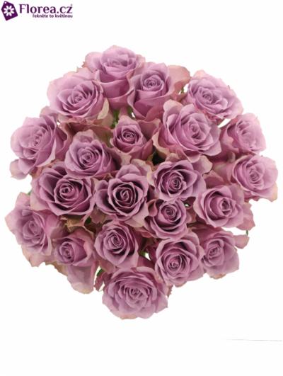Kytice 21 fialových růží NIGHTINGALE 70cm