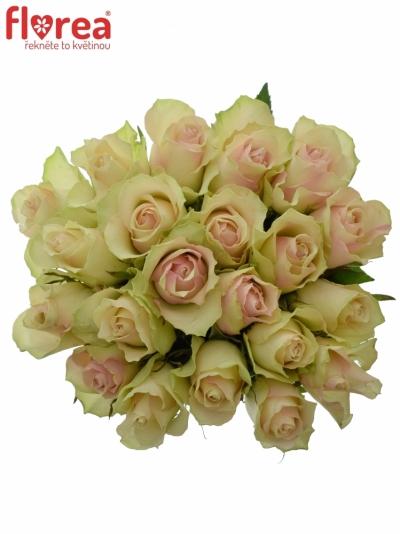 Kytice 21 krémovozelených růží LA BELLE 50cm