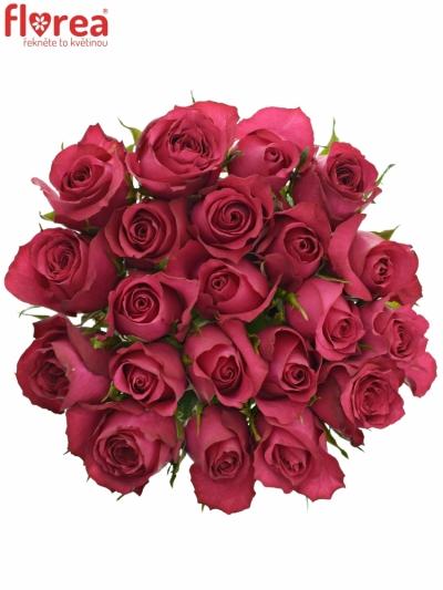 Kytice 21 malinových růží GRAND EUROPE 40cm
