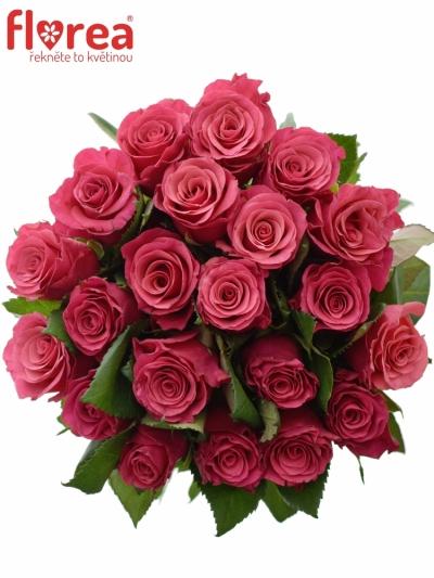 Kytice 21 malinových růží TACAZZI 50cm