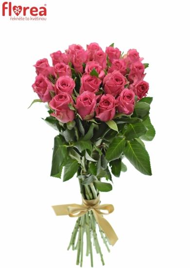 Kytice 21 malinových růží TENGA VENGA 40cm