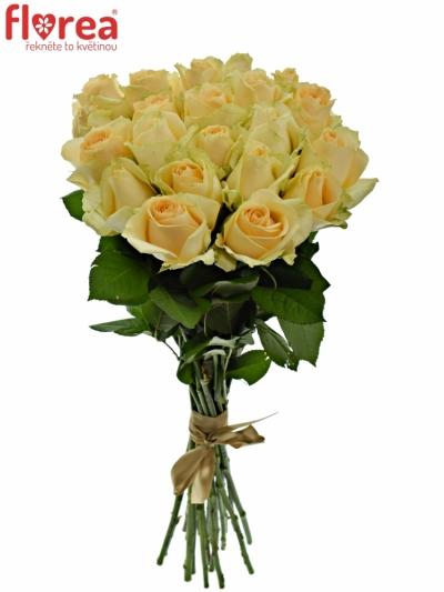 Kytice 21 meruňkových růží MAGIC AVALANCHE 40cm