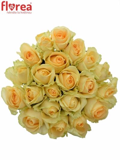 Kytice 21 meruňkových růží MAGIC AVALANCHE 60cm