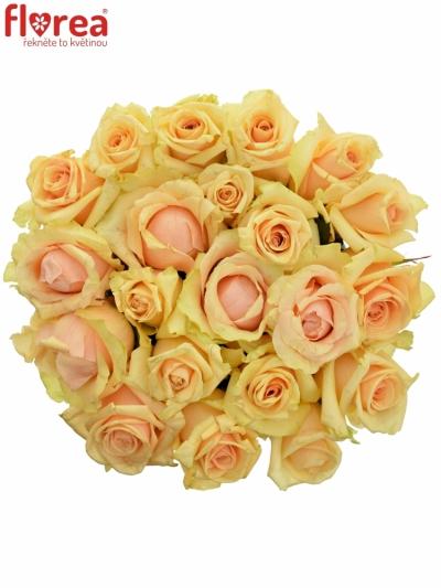 Kytice 21 meruňkových růží PRIMA DONNA