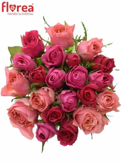 Kytice 21 míchaných růží ABERIA 40cm