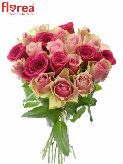 Kytice 21 míchaných růží ALHIVIA