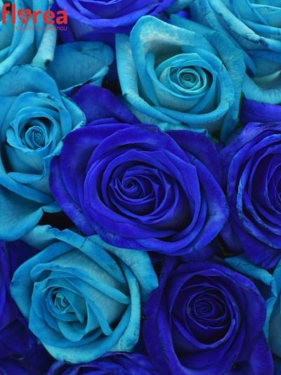Kytice 21 míchaná BLUE ADRIANA 60cm