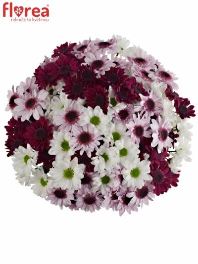 Kytice 21 míchaných chryzantém WHITE STRESSA
