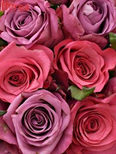 Kytice 21 míchaných růží BENAYA