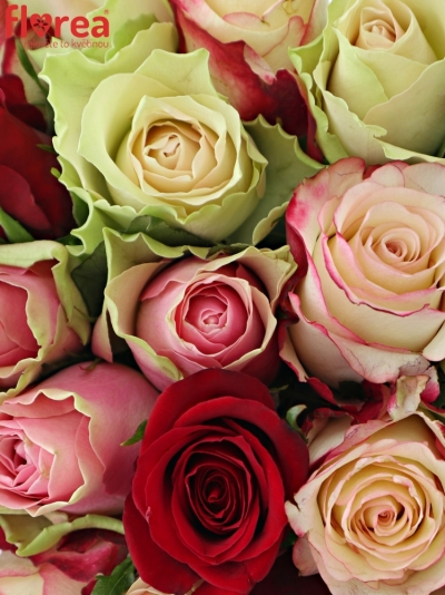Kytice 21 míchaných růží EBIGALE 50cm