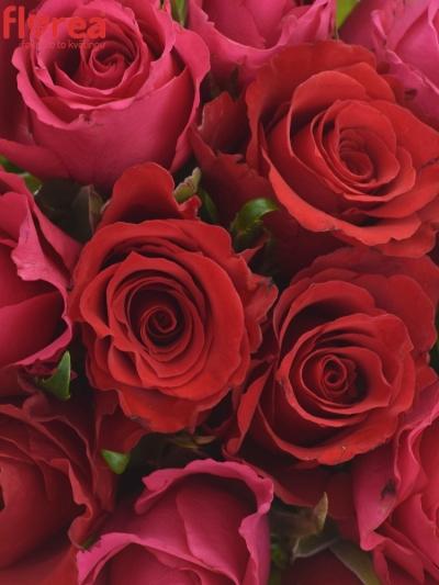 Kytice 21 míchaných růží GRACIANA 35cm