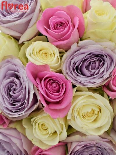 Kytice 21 míchaných růží LIGHT LORRIESS
