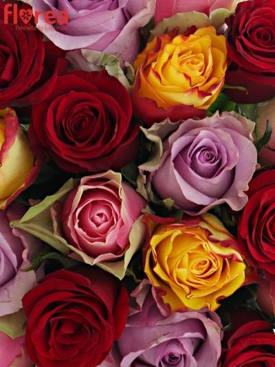 Kytice 21 míchaných růží MIRIAM 35cm
